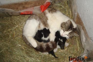 verkauft kleine Bauernhof Kätzchen ab Mitte/Ende Juni abzugeben