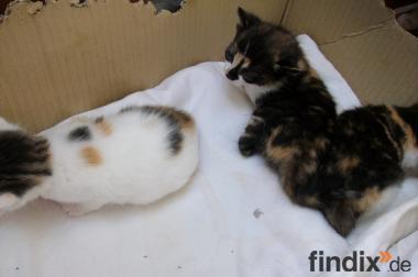 Kleine Kätzchen suchen ein neues Zuhause