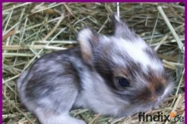 Kleine Kaninchen