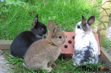 kleine Kaninchen abzugeben