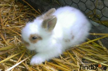 Kleine Kaninchenkinder suchen neuen Wirkungskreis auch Widder