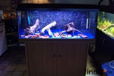 Komplett Aquarium 100x40x40