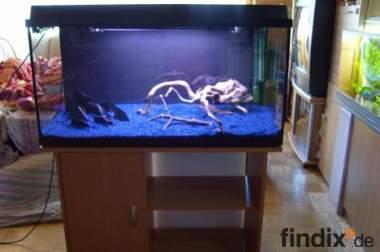 Komplett Aquarium 200L, Unterschrank, CO2, Bodenfluter