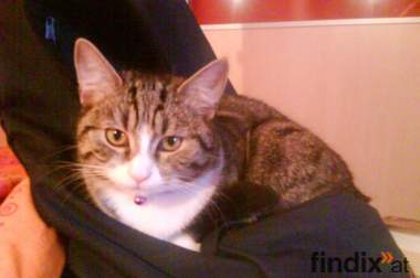 verschenke kuschelbedürftige junge Katze