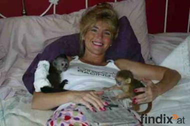 lovely Kapuziner-Affen für die Wiederverwendung Heimat jedes Haus