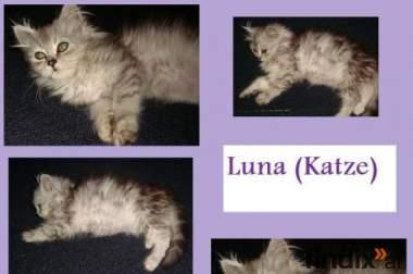 Luna entzückendes Persermädchen