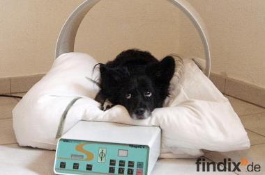 Magnetfeldgerät von elec system für Hunde, Katzen und Kleintiere