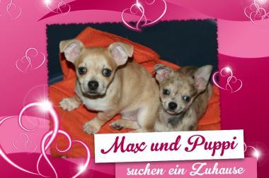 Max und Puppi suchen ein Zuhause