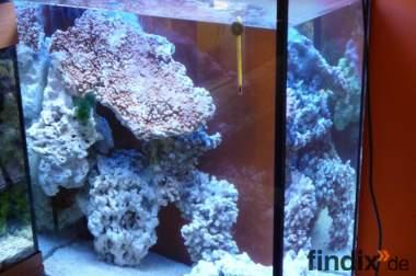 Meerwasseraquarium  63x35x80 und Zubehör
