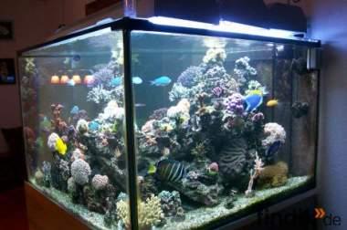 Meerwasseraquarium mit 3 bohrungen und filterbecken