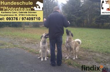 Mobile Hundeschule ach für herdenschutzhunde z.B.Kangal