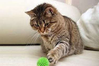 Mobile Katzenbetreuung auch kurzfristig möglich