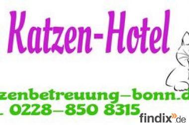 """Neu für Bonn"""" Katzenhotel"""" ihre Katzenpension bzw. Katzenbetreuun"""