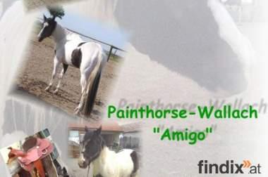 "Painthorse-Wallach ""Amigo"""