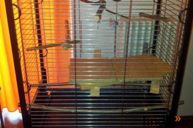 Papageien Käfig