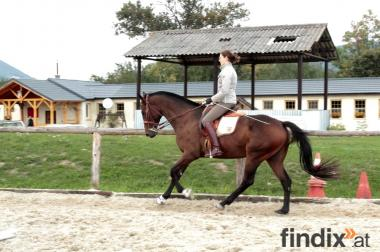 Pferd King