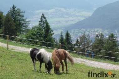 Pferdeboxen mit Pflege und Futter in wunderschönem Reitgebiet!