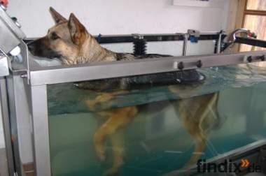 Physiotherapie f. Hunde mit Wasserlaufband