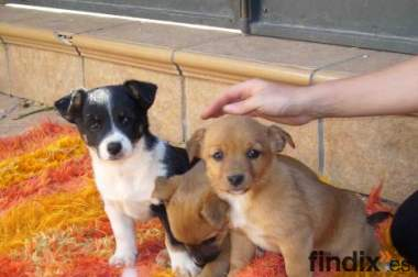 Regalo perros de caza en andalucia