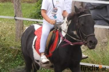 Reitunterricht auf tollen Pferden für Kinder und Jugendliche