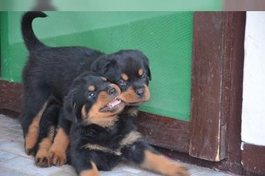 Hunde Welpen In Hamburg Abzugeben Findix De