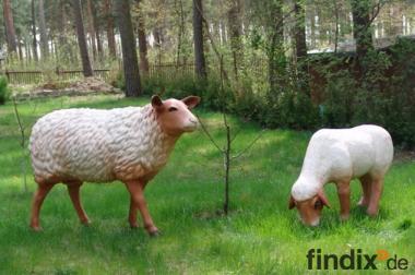 Schafe für Ihren Garten ...Tel. 033767 - 30750