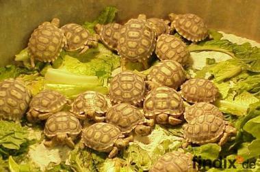 Schildkröten und Schildkröten