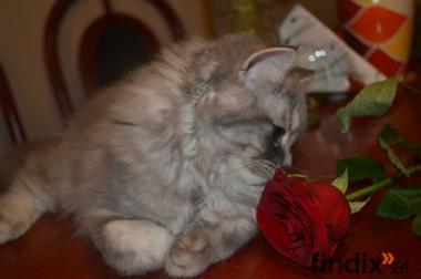 Schmusekater Amor