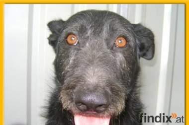 Schnauzermix Stanley sucht Menschen mit Hunde-Erfahrung