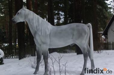 Sie möchten so ein Deko Pferd lebensgross erwerben...