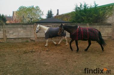 Suche dringend zwei mitreiter für meine zwei Pferde
