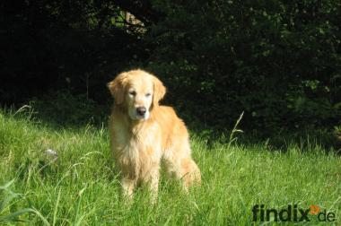 Suche privaten Geldgeber/Hundeliebhaber