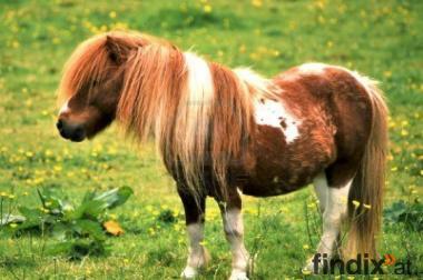 Suche süße Ponies