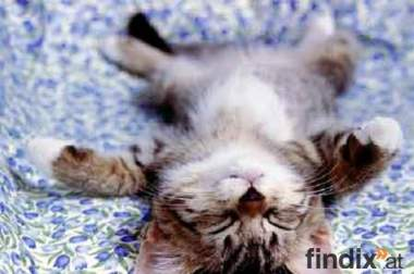 Suche Süßes Katzenbaby!!!