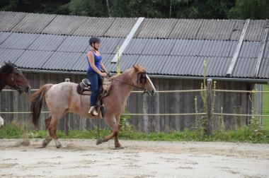 Suchen Pflege-/Reitbeteiligung (2 Pferde)