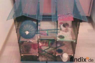 Süßer Teddyhamster + Käfig zu Verkaufen