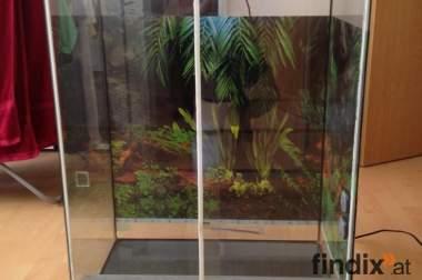 terrarium mit Einrichtung