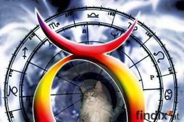 Tierastrologie & Horoskope für Hund Katz & Co