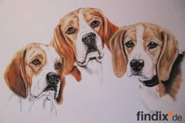 Tierportrait,  Tierzeichnung,  Tiermalerei,  Pferdemalerei