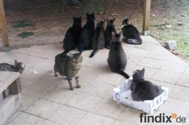 Tierschutzverein Seelow hat noch junge Katzen abzugeben