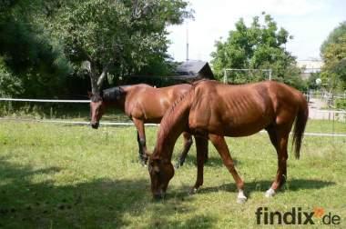 Tolle 16m² große Pferdebox, als Offenstall zu nutzen