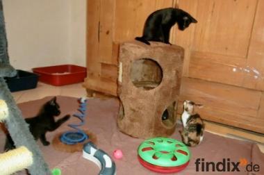 Total verschmuste Katzenbabys