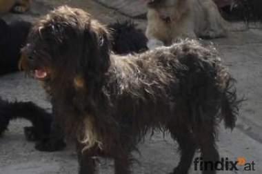 Traumhund Griffi sucht ein Zuhause für immer !