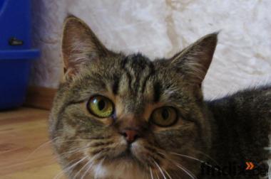Unsere kastrierte Katze, 1 J.