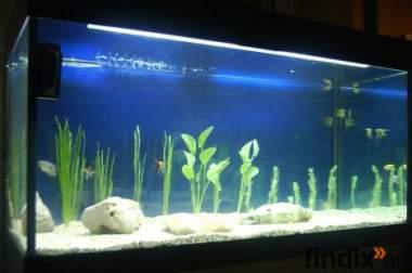 verkaufe aquarium 400 lt mit 2 pumpen und unterschrank.