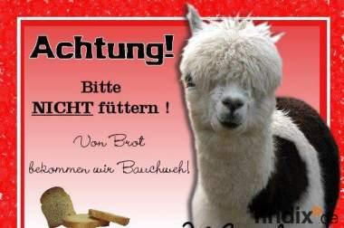 Warnschilder für Lama - Alpaka und Kamelfreunde. Pixelschmied