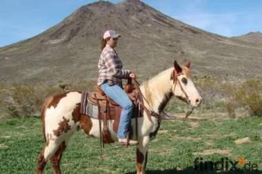 Westernpferde direkt aus Arizona - Hidalgo American Paint Horse