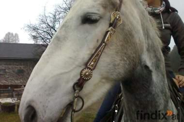 Westershowzaumzeug einohr für jedes Pferd geeignet!!