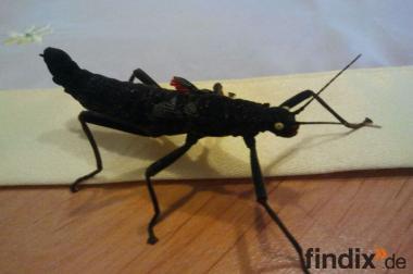 Wir geben verschiedene Insekten ab