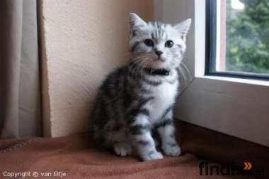 Wir haben Whiskaskatzen